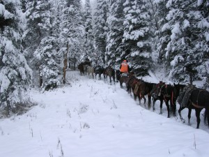 horse-pack-train-in-the-mountains