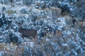 deer-after-a-snow-storm