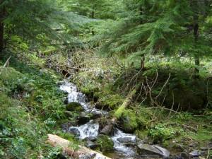 mountain-spring-water