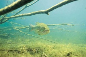 under-water-bass-structure