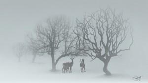 deer-in-spring-snow