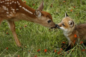 fawn-and-baby-fox