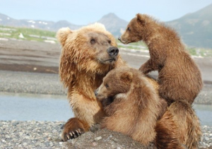 mother-grizzly-with-cubs