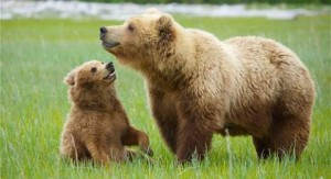 grizzly-mother-and-cub
