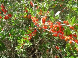 service-berries