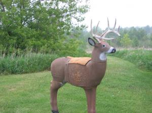 3-D-buck-target