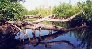 fallen-tree-in-a-lake