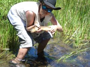 cut throat trout in Colorado