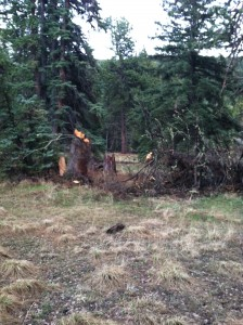 tree-struck-by-lightning
