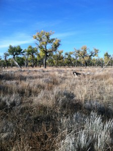 Colorado-plains-deer-hunt