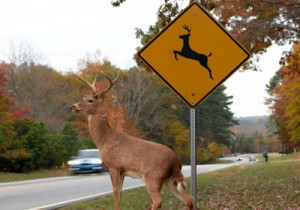 buck-crossing-the-road