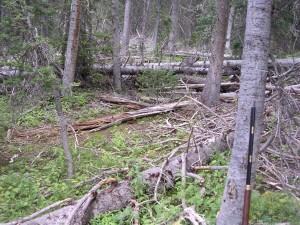 tough-elk-terrain