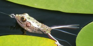 frog-lure