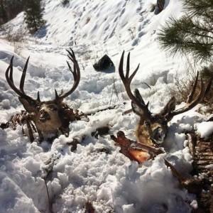 poached-deer
