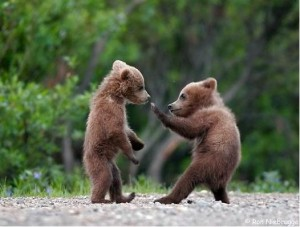 bear-cubs-in-spring