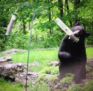 black-bear-with-bird-feeder
