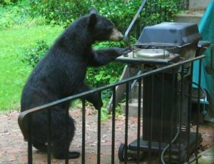 black-bear-and-grill