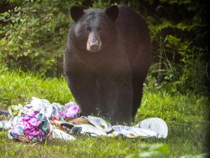 black-bear-and-trash